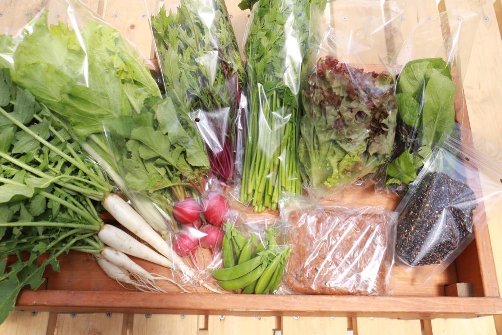 お野菜BOXの出荷、再開です!