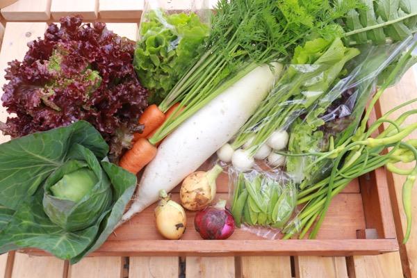 今週のお野菜BOX
