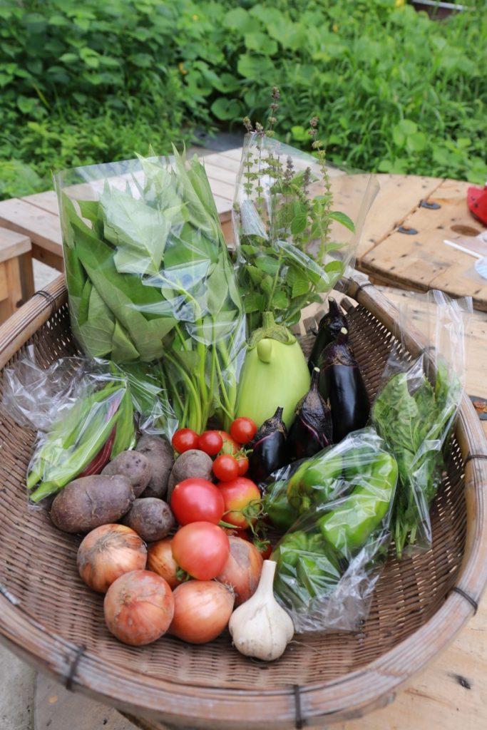 8月1週目のお野菜のことと、身体のことと。